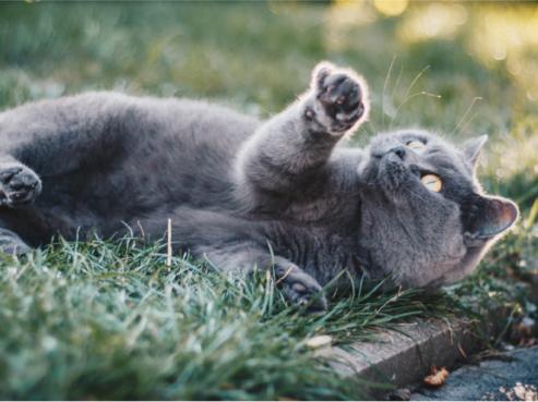 Захворювання підшлункової залози котів