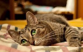 Что делать, если кошка спит на кровати?
