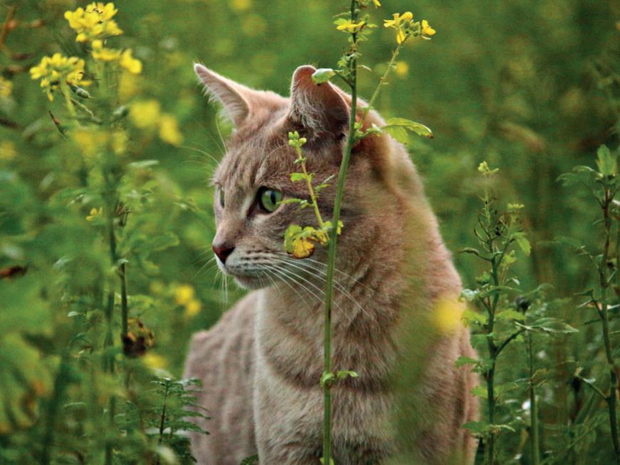 Опіки котів