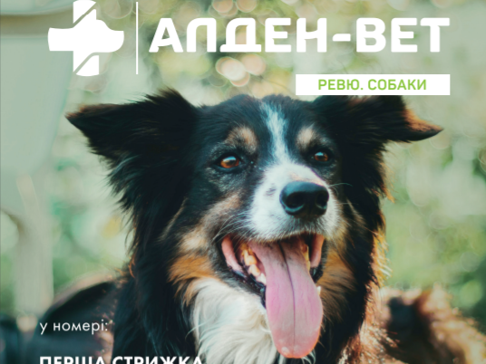 Переможці конкурсу на обкладинку Ревю. Літо 2021
