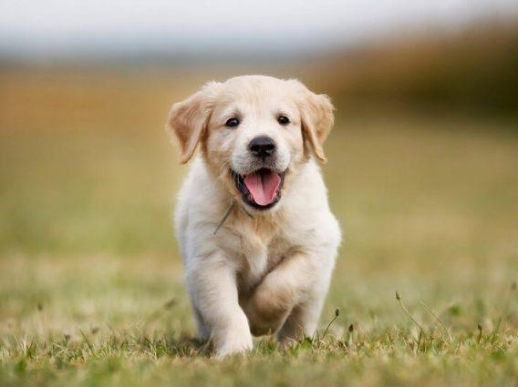 Перший візит до ветеринарної клініки: питання, які ви повинні поставити лікарю