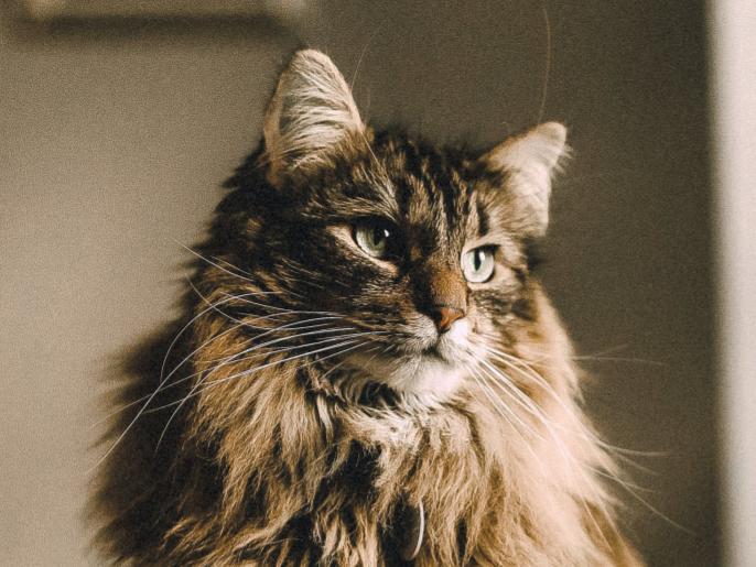 Дерматологічні хвороби котів