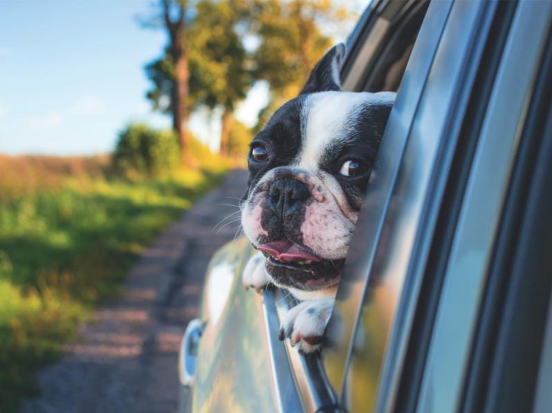 Підготовка до перевезення собаки за кордон