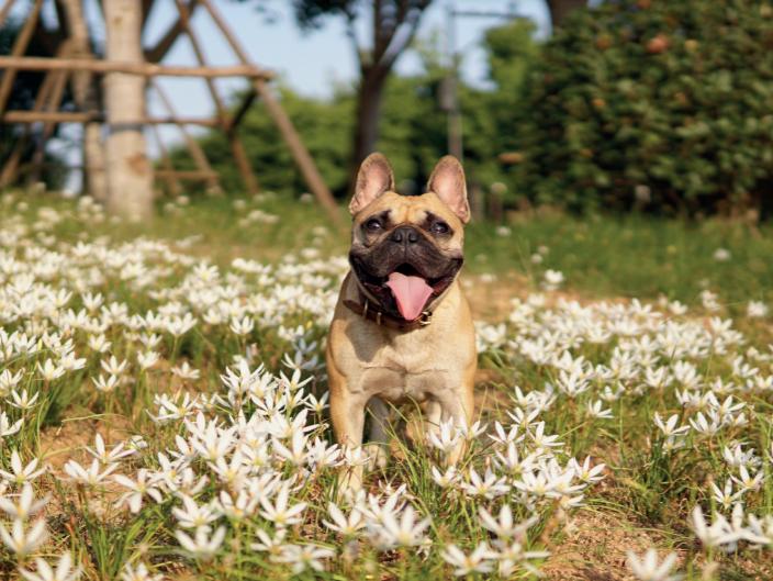 Дерматологічні хвороби собак